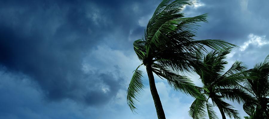 Hurricane Harvey & Irma
